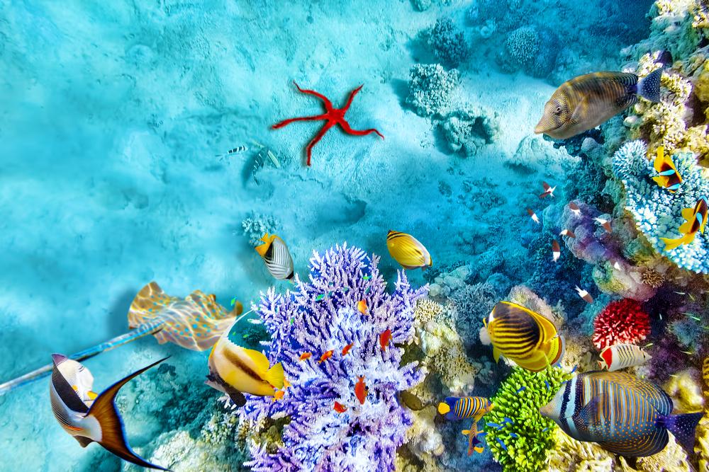 фауна и флора мальдивских островов