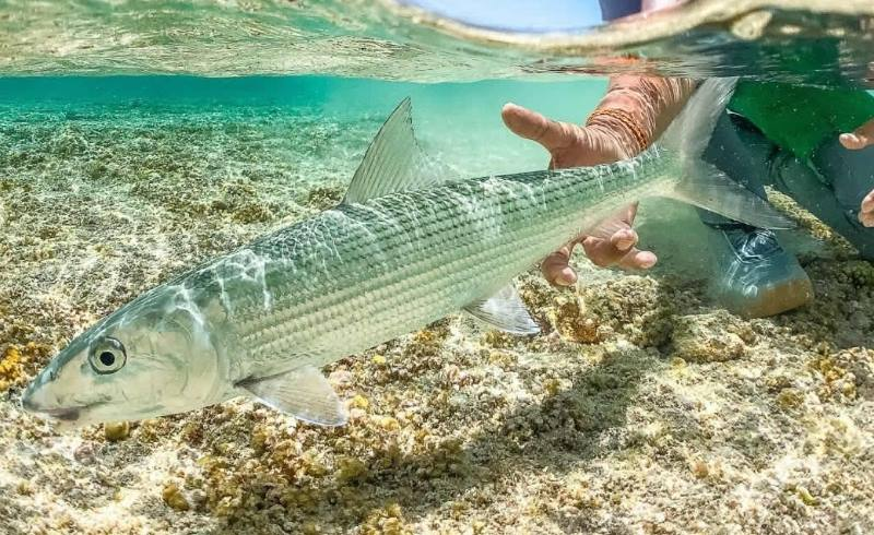 покормить рыбок