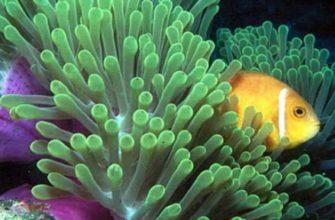 подводный мир острова