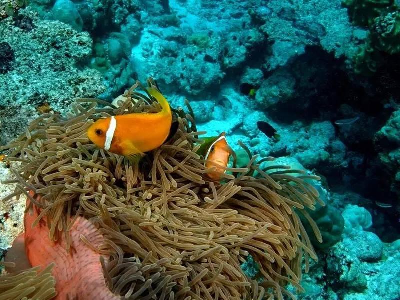 Мальдивы – комплекс небольших островов